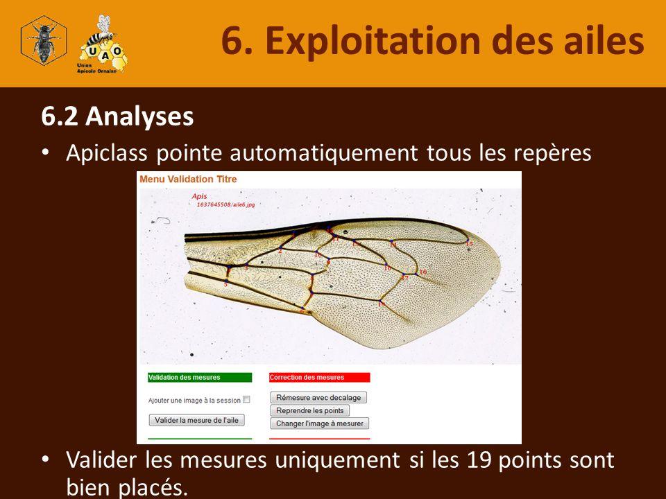 6.2 Analyses Apiclass pointe automatiquement tous les repères Valider les mesures uniquement si les 19 points sont bien placés. 6. Exploitation des ai