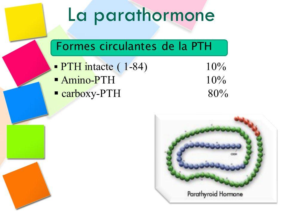 PTH intacte ( 1-84) 10% Amino-PTH 10% carboxy-PTH 80% Formes circulantes de la PTH