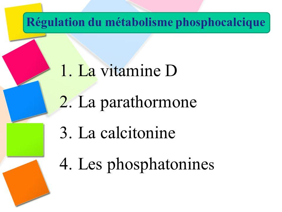 Régulation du métabolisme phosphocalcique 1. La vitamine D 2. La parathormone 3. La calcitonine 4. Les phosphatonine s