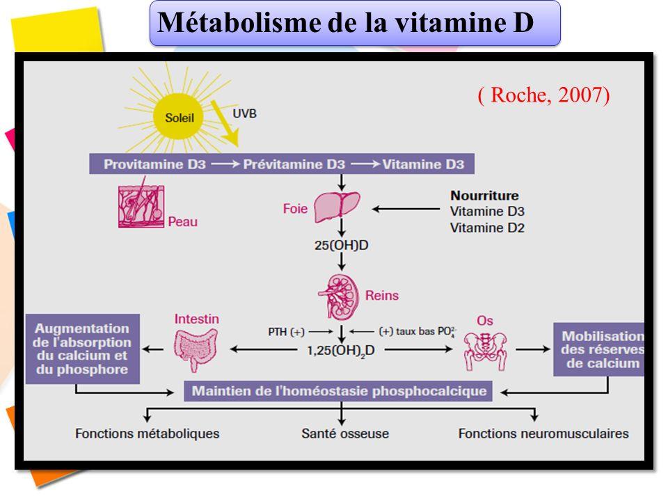 Métabolisme de la vitamine D ( Roche, 2007)