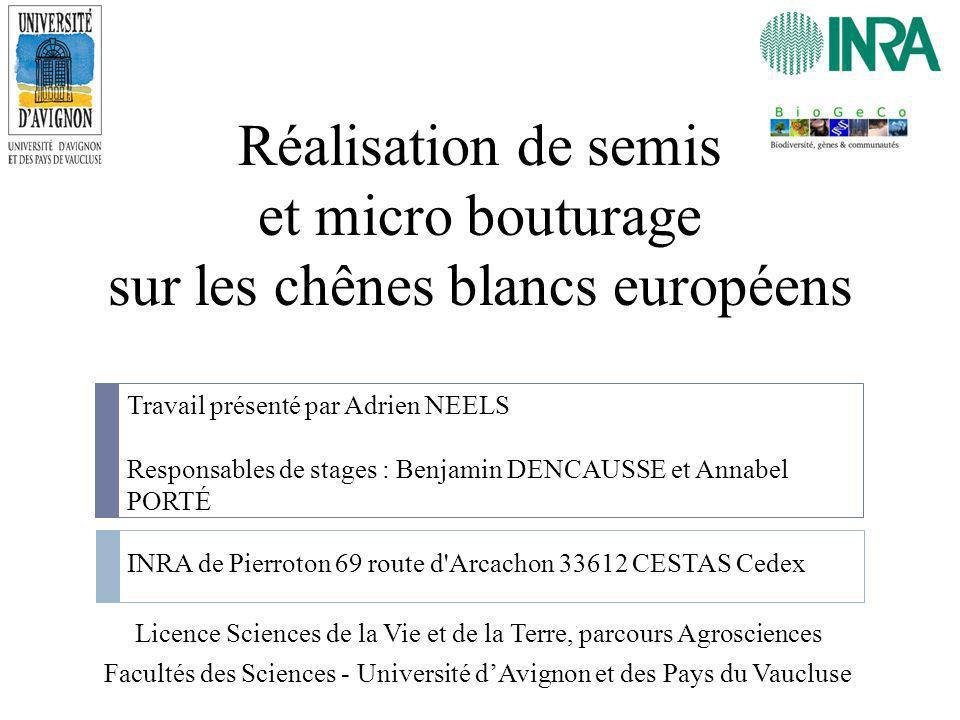 Réalisation de semis et micro bouturage sur les chênes blancs européens Licence Sciences de la Vie et de la Terre, parcours Agrosciences Facultés des
