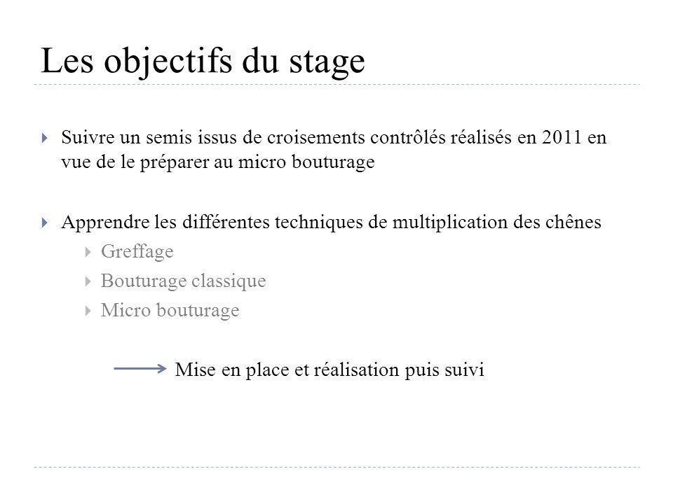 Les objectifs du stage Suivre un semis issus de croisements contrôlés réalisés en 2011 en vue de le préparer au micro bouturage Apprendre les différen