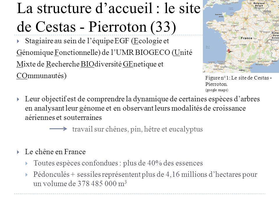 La structure daccueil : le site de Cestas - Pierroton (33) Stagiaire au sein de léquipe EGF (Ecologie et Génomique Fonctionnelle) de lUMR BIOGECO (Uni