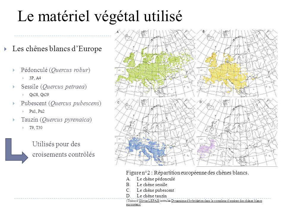 Le matériel végétal utilisé Les chênes blancs dEurope Pédonculé (Quercus robur) 3P, A4 Sessile (Quercus petraea) Qs28, Qs29 Pubescent (Quercus pubesce
