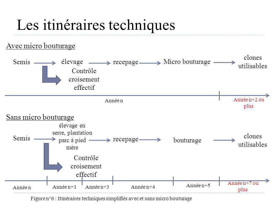 Les itinéraires techniques Figure n°6 : Itinéraires techniques simplifiés avec et sans micro bouturage Contrôle croisement effectif Année n bouturage