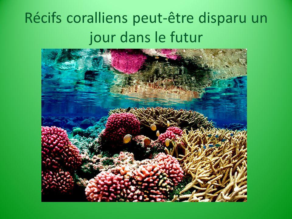 Récifs coralliens peut-être disparu un jour dans le futur