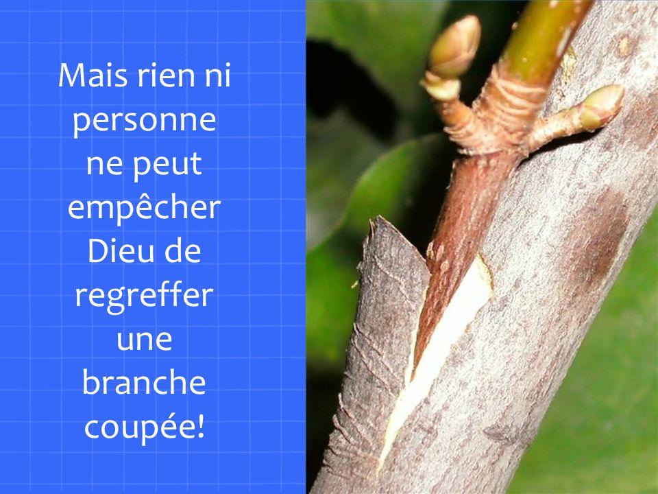 Mais rien ni personne ne peut empêcher Dieu de regreffer une branche coupée!