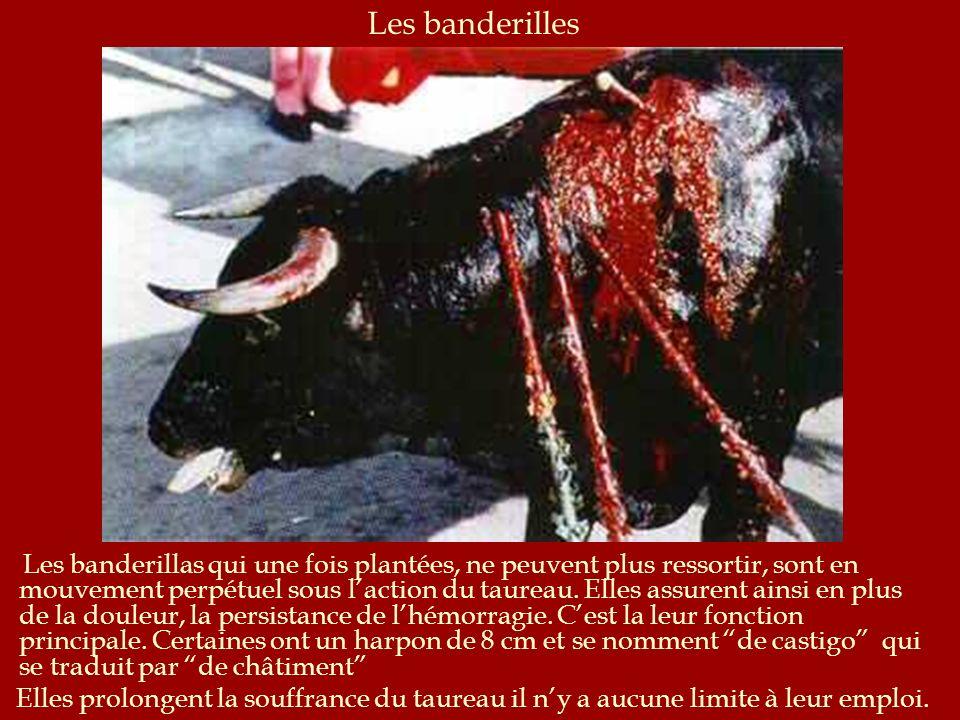 Le travail du picador Si le torero voit que le taureau a de lénergie, il ordonne au picador de faire son travail. Ce dernier consiste à diminuer la vi