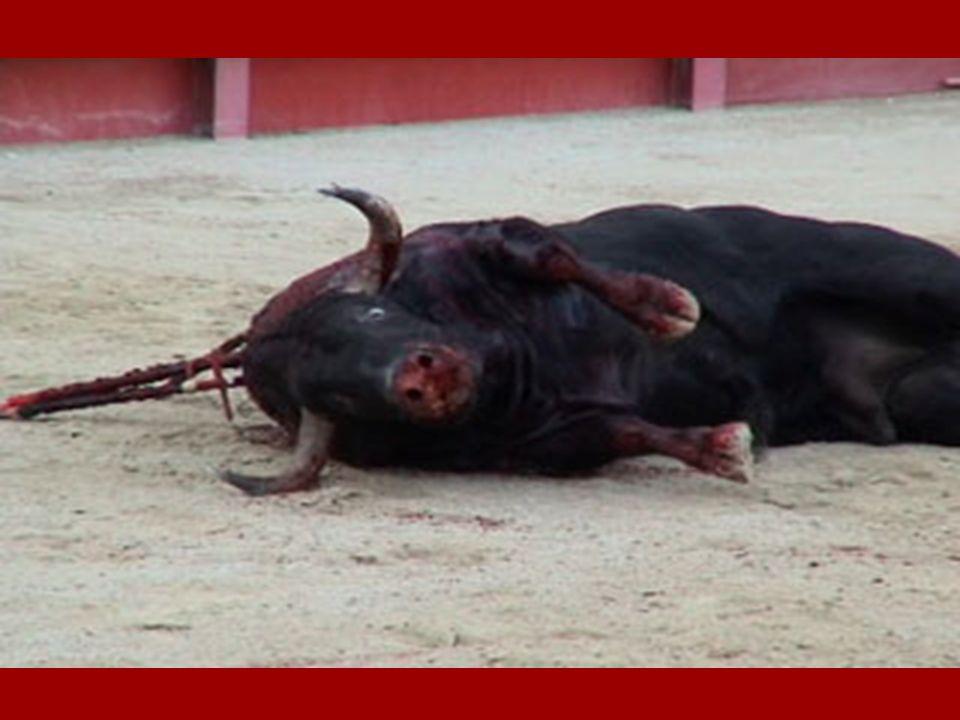 CORRIDA = Torturer et tuer pour se divertir Jai toujours entendu dire que la corrida est un art. Ce nest pas vrai.... Cest la science de la torture Ja