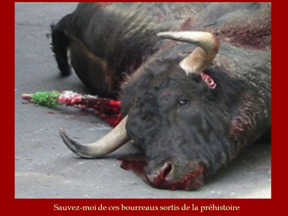 Vous pensez que le taureau est valide mais il ne lest pas ! 24 Heures avant dentrer dans larêne, il est isolé dans le noir, afin que la lumière et les