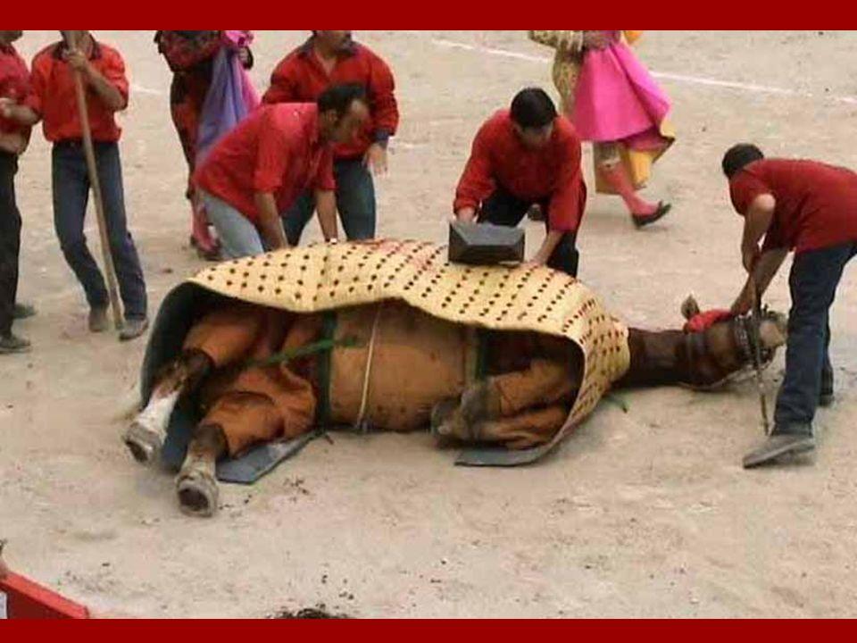 Les chevaux des picadors Il sagit de chevaux nayant aucune valeur commerciale. Ils meurent en général après 3 ou 4 corridas maximum. Il est courant qu
