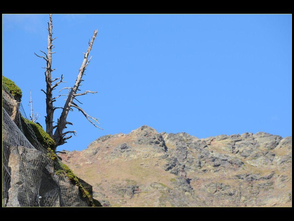 Une idée qui part de la nécessité de respecter lenvironnement naturel, et cest ainsi que a été décidé de situer les activités après ski le long de la vallée afin de protéger la pureté et léquilibre environnemental de ce site extraordinaire
