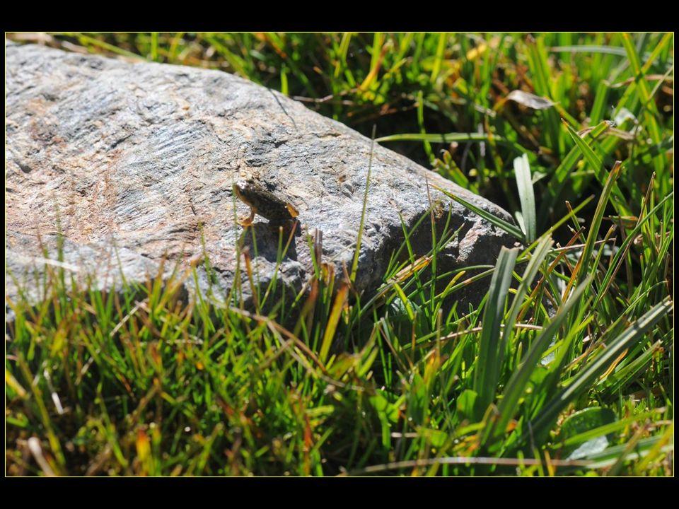 avec ses habitantes : de toutes petites grenouilles !!!!!