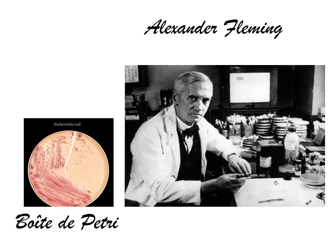 Boîte de Petri Alexander Fleming
