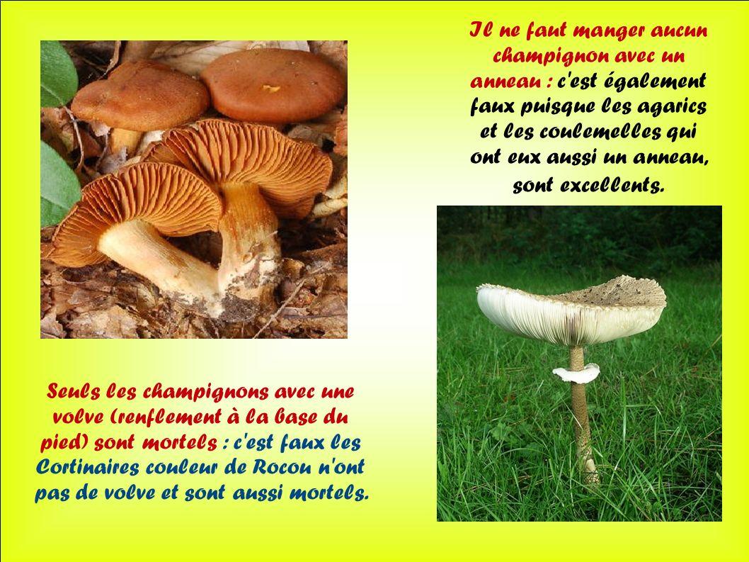 Seuls les champignons avec une volve (renflement à la base du pied) sont mortels : c'est faux les Cortinaires couleur de Rocou n'ont pas de volve et s