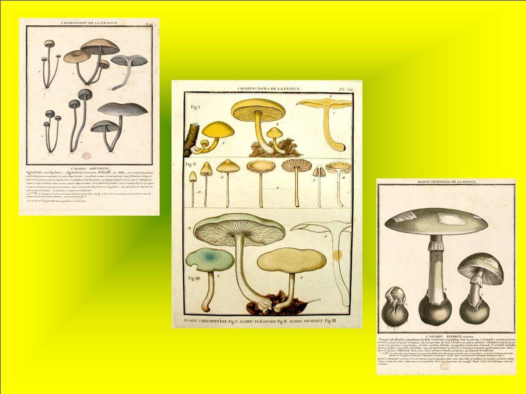 Elias-Magnus Fries Mycologue et botaniste suédois, Surnommé le « Linné des champignons », il est considéré comme le père de la mycologie scientifique et est le fondateur de la systématique des champignons.