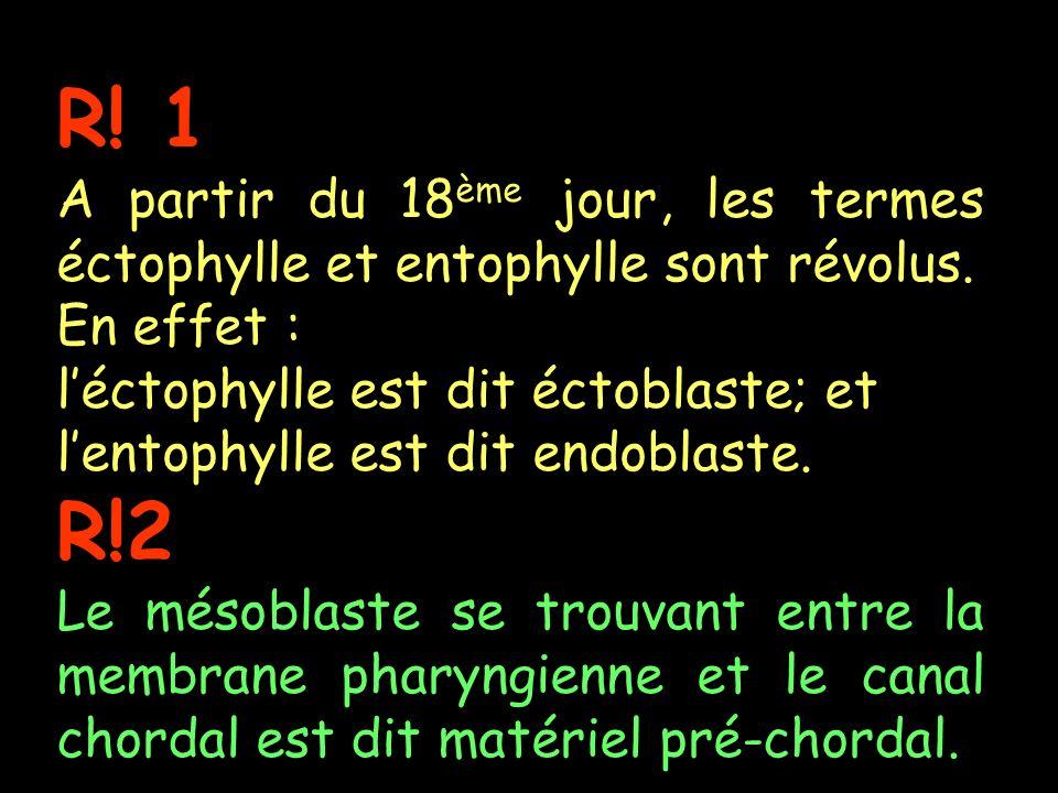 R! 1 A partir du 18 ème jour, les termes éctophylle et entophylle sont révolus. En effet : léctophylle est dit éctoblaste; et lentophylle est dit endo