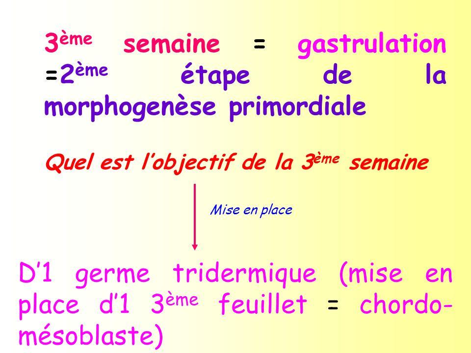 3 ème semaine = gastrulation =2 ème étape de la morphogenèse primordiale Quel est lobjectif de la 3 ème semaine Mise en place D1 germe tridermique (mi