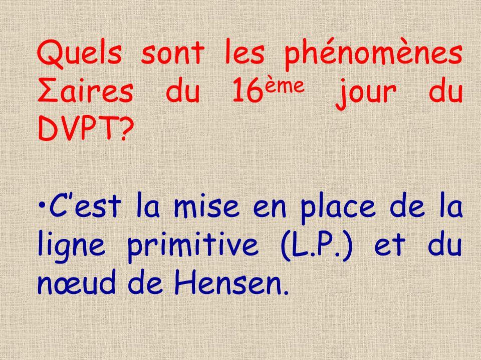 Quels sont les phénomènes Σaires du 16 ème jour du DVPT? Cest la mise en place de la ligne primitive (L.P.) et du nœud de Hensen.