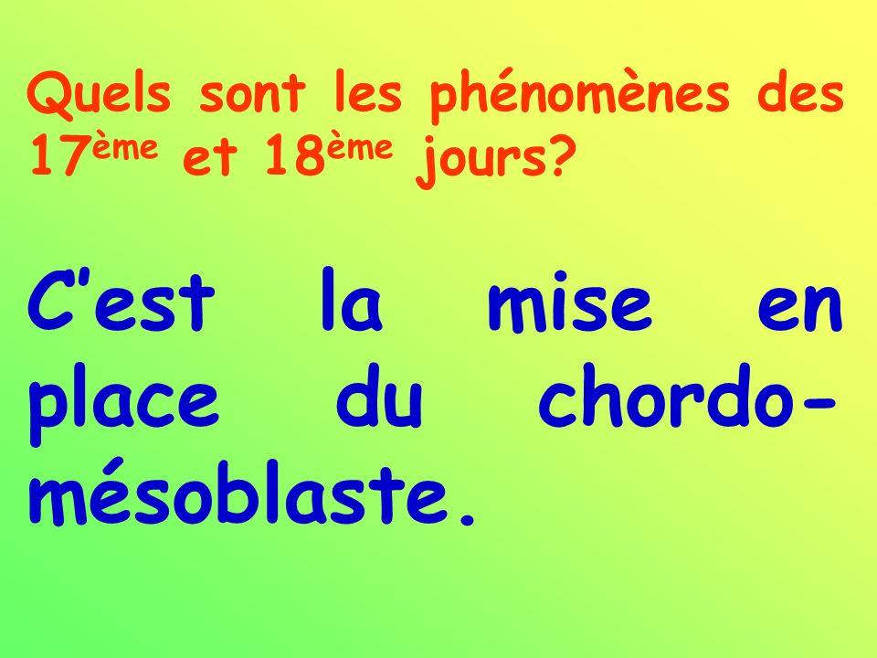 Quels sont les phénomènes des 17 ème et 18 ème jours? Cest la mise en place du chordo- mésoblaste.