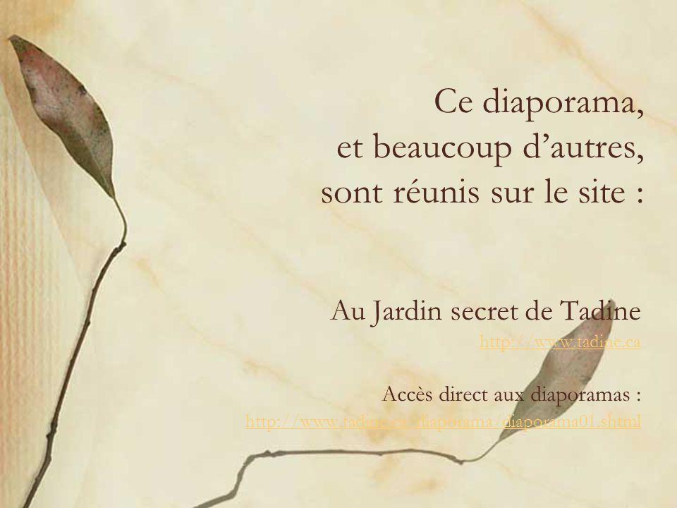 Ce diaporama, et beaucoup dautres, sont réunis sur le site : Au Jardin secret de Tadine http://www.tadine.ca Accès direct aux diaporamas : http://www.tadine.ca/diaporama/diaporama01.shtml