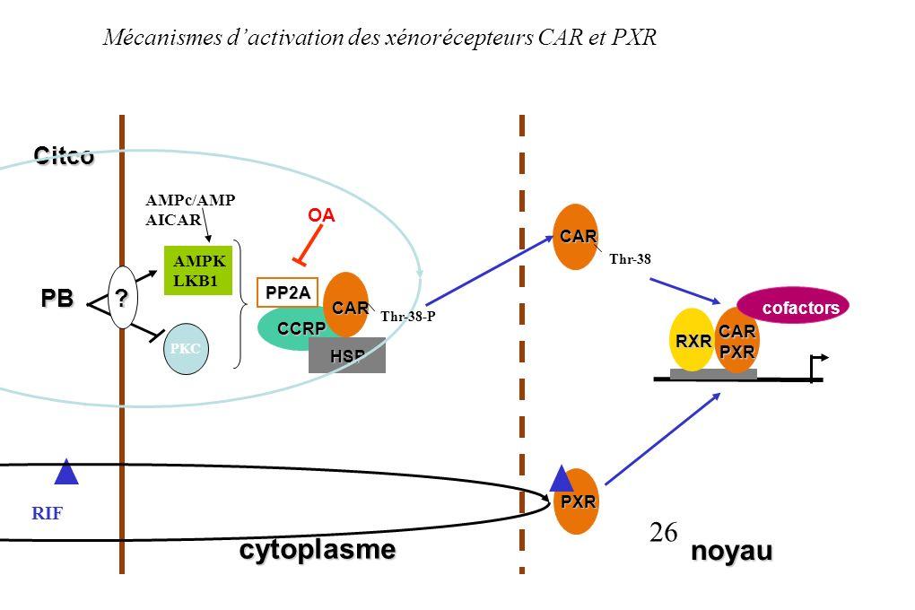 26 Mécanismes dactivation des xénorécepteurs CAR et PXR CARPXR RXR cofactors CAR cytoplasme noyau PB CCRP OA AMPc/AMP AICAR AMPK LKB1 HSP CAR PXR RIF