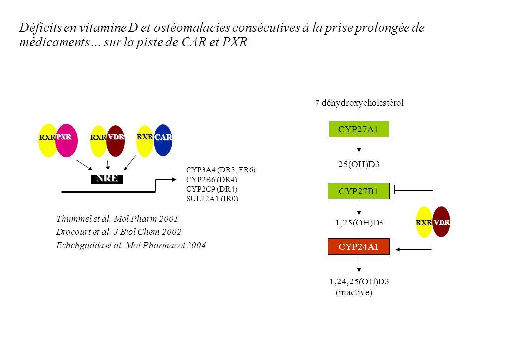 CYP3A4 (DR3, ER6) CYP2B6 (DR4) CYP2C9 (DR4) SULT2A1 (IR0) PXR RXR VDR RXR RXRCAR NRE Thummel et al. Mol Pharm 2001 Drocourt et al. J Biol Chem 2002 Ec