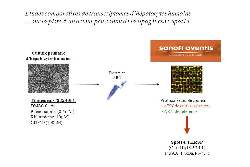 Protocole double couleur - ARN de cultures traitées - ARN de référence Extraction ARN Culture primaire dhépatocytes humains Traitements (8 & 40h): DMS