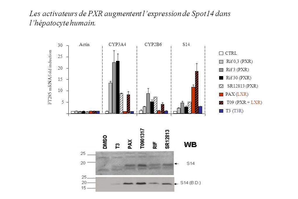 Les activateurs de PXR augmentent lexpression de Spot14 dans lhépatocyte humain.
