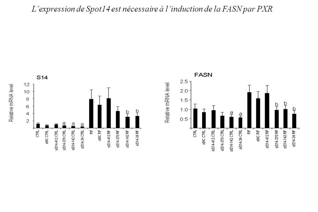 Lexpression de Spot14 est nécessaire à linduction de la FASN par PXR