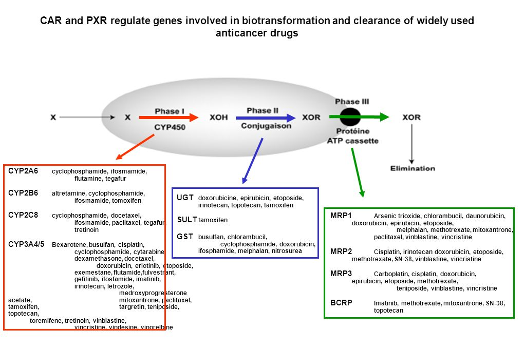 CAR and PXR regulate genes involved in biotransformation and clearance of widely used anticancer drugs MRP1 Arsenic trioxide, chlorambucil, daunorubic