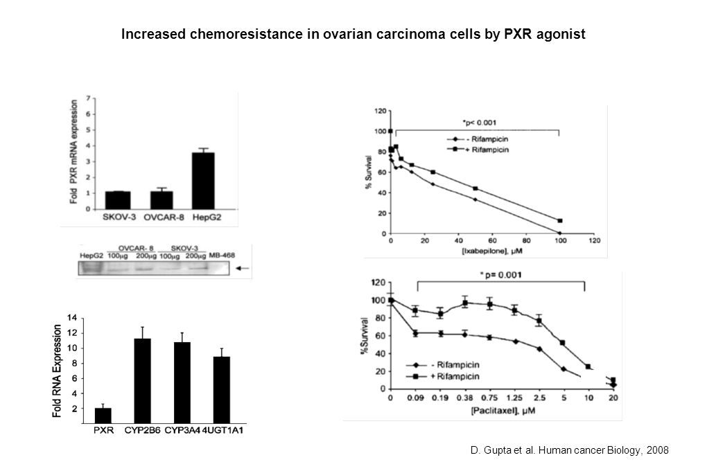 SKOV-3 D. Gupta et al. Human cancer Biology, 2008 Increased chemoresistance in ovarian carcinoma cells by PXR agonist