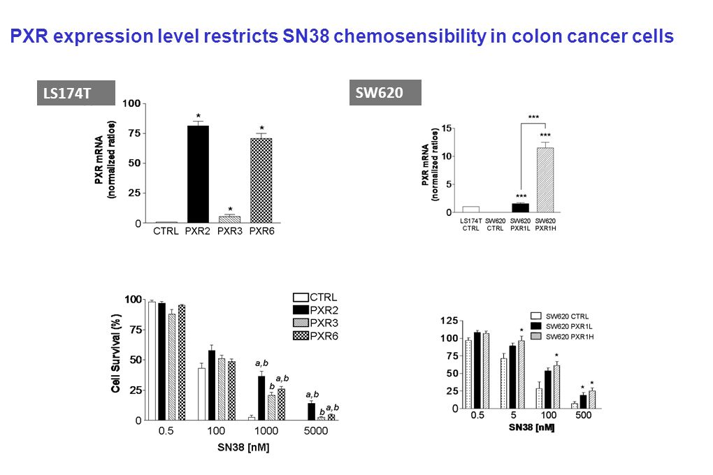 SW620 LS174T PXR expression level restricts SN38 chemosensibility in colon cancer cells