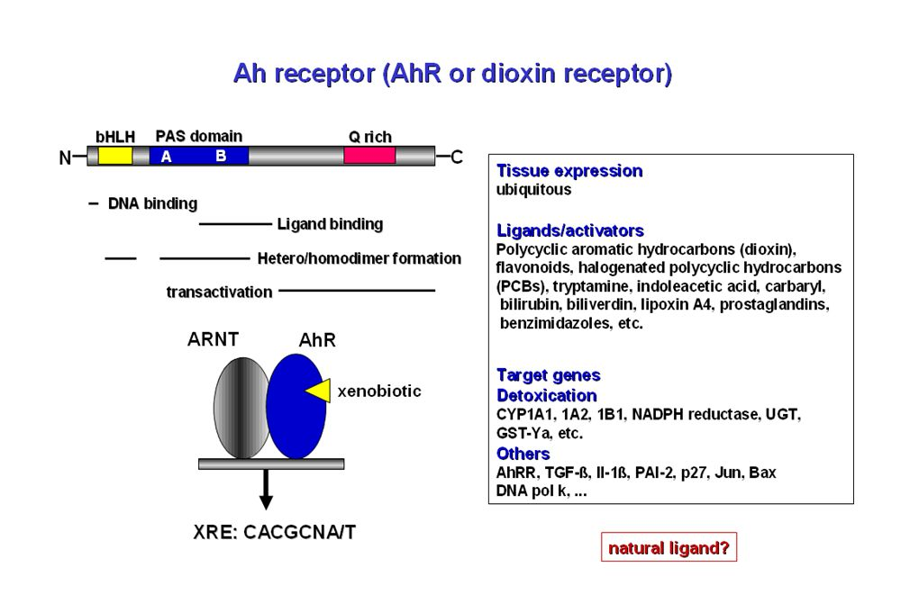 Raynal C. et al. Mol. Cancer Res 2010 PXR expression in normal and cancerous human colon tissues