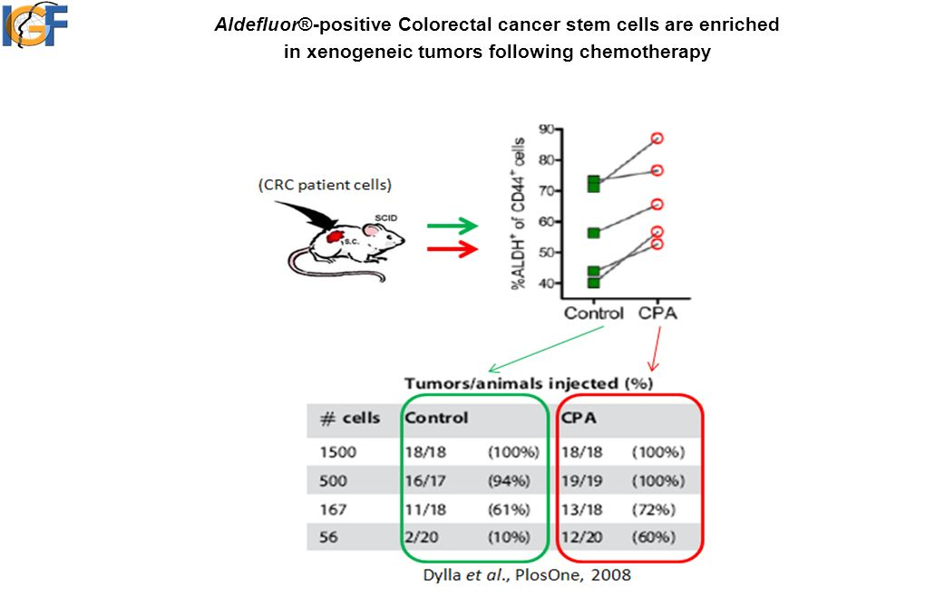 Aldefluor®-positive Colorectal cancer stem cells are enriched in xenogeneic tumors following chemotherapy