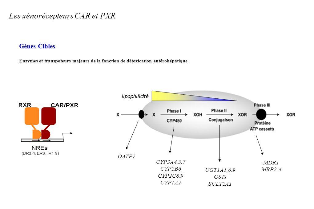 Les xénorécepteurs CAR et PXR Gènes Cibles Enzymes et transpoteurs majeurs de la fonction de détoxication entérohépatique OATP2 CYP3A4,5,7 CYP2B6 CYP2