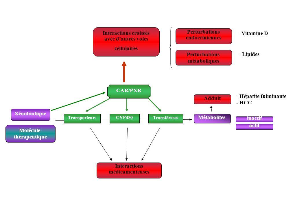 Adduit - Hépatite fulminante - HCC Xénobiotique CAR/PXR Transporteurs Métabolites CYP450Transférases Interactions médicamenteuses Molécule thérapeutiq