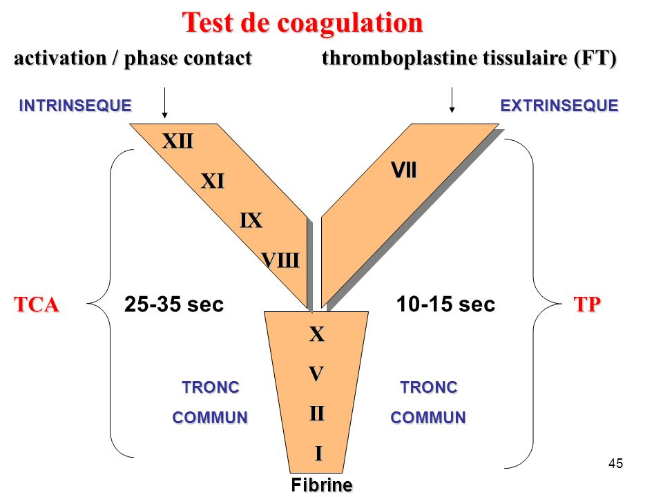 45 thromboplastine tissulaire (FT) VII VII EXTRINSEQUE TP 10-15 sec Test de coagulation activation / phase contact XII XI XI IX IX VIII VIII X V II II I INTRINSEQUE TRONC COMMUN TCA ibrine Fibrine TRONC COMMUN 25-35 sec