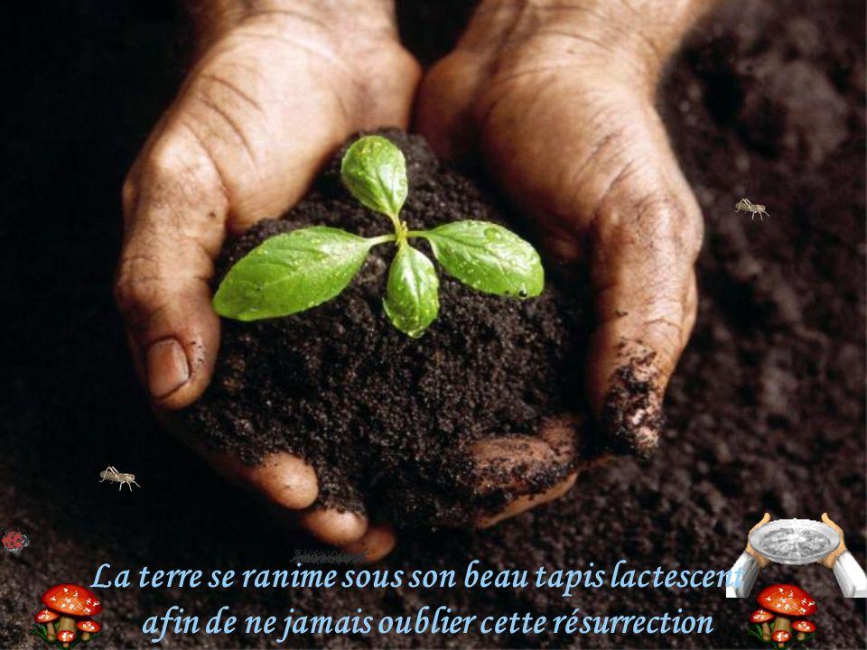 La terre se ranime sous son beau tapis lactescent afin de ne jamais oublier cette résurrection