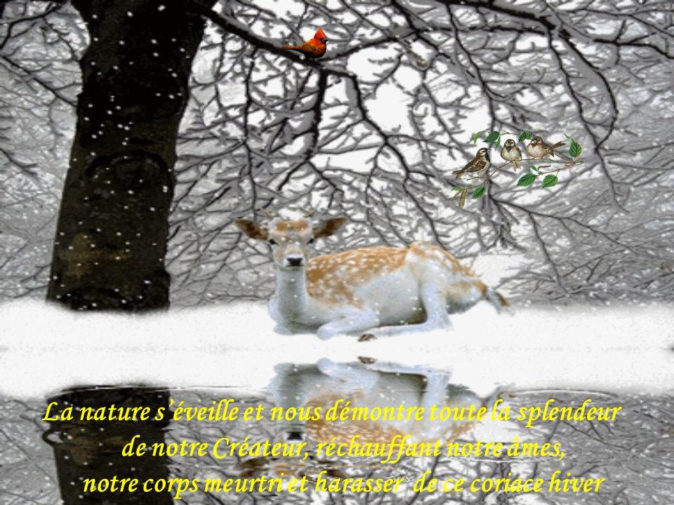 La nature séveille et nous démontre toute la splendeur de notre Créateur, réchauffant notre âmes, notre corps meurtri et harasser de ce coriace hiver