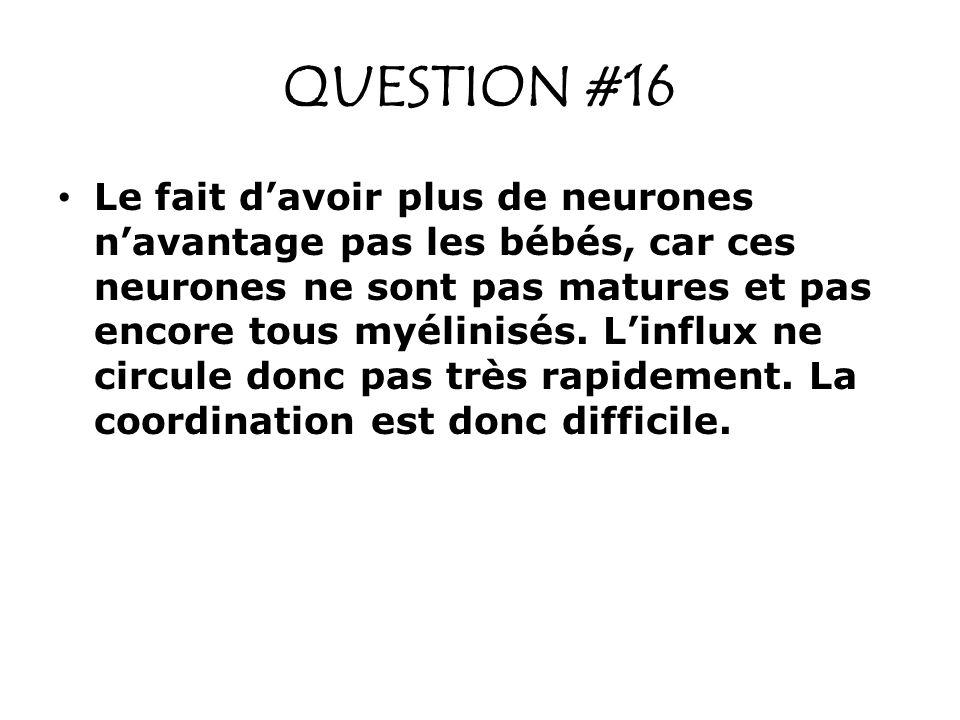 QUESTION #16 Le fait davoir plus de neurones navantage pas les bébés, car ces neurones ne sont pas matures et pas encore tous myélinisés. Linflux ne c