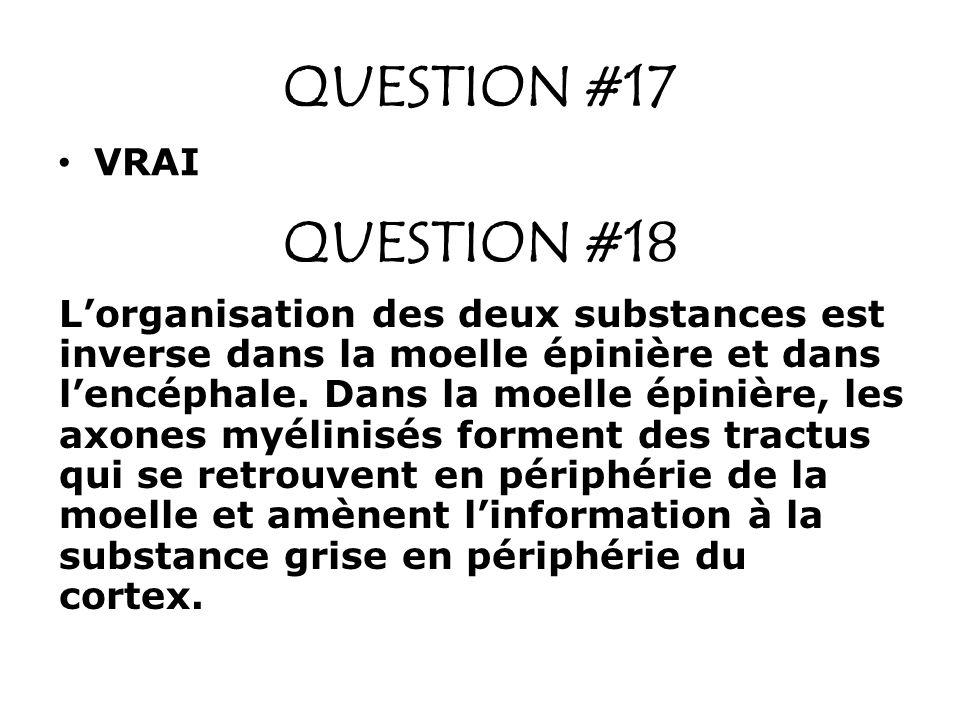 QUESTION #17 VRAI QUESTION #18 Lorganisation des deux substances est inverse dans la moelle épinière et dans lencéphale. Dans la moelle épinière, les