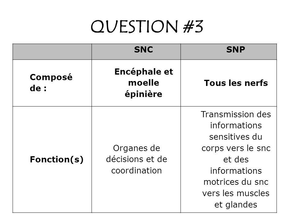 QUESTION #3 SNCSNP Composé de : Encéphale et moelle épinière Tous les nerfs Fonction(s) Organes de décisions et de coordination Transmission des infor