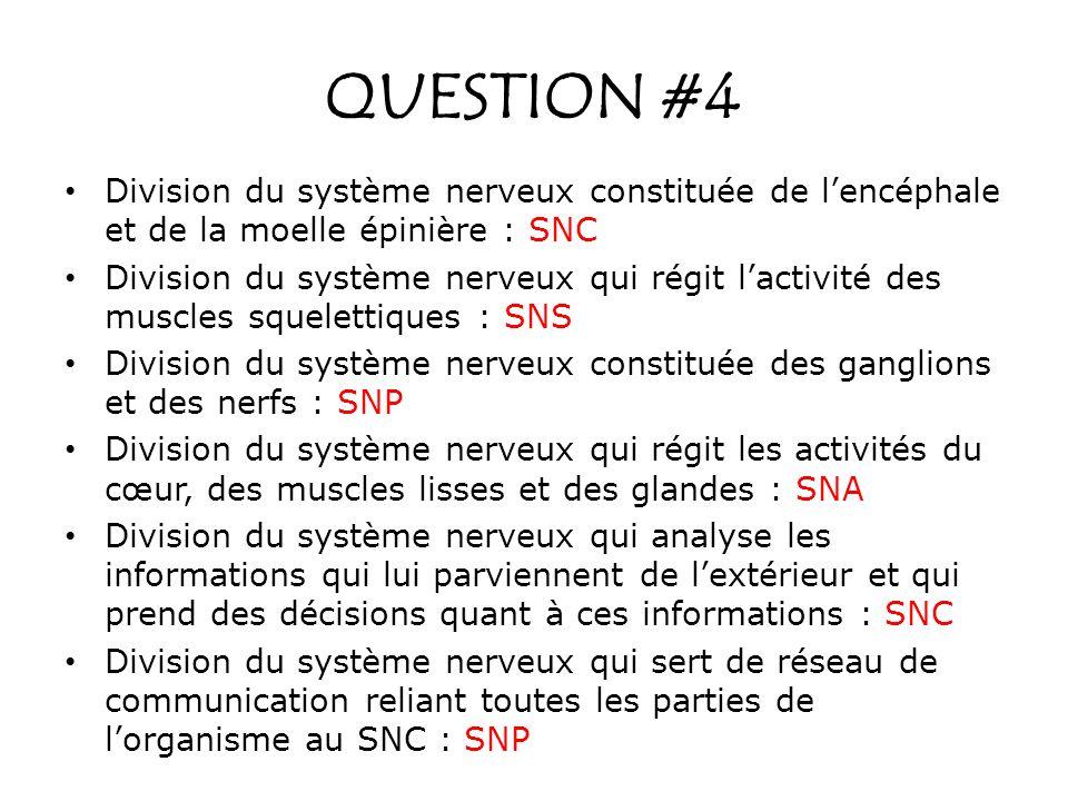 QUESTION #4 Division du système nerveux constituée de lencéphale et de la moelle épinière : SNC Division du système nerveux qui régit lactivité des mu