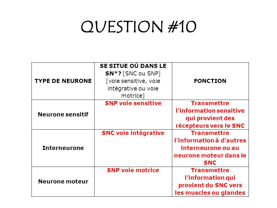 QUESTION #10 TYPE DE NEURONE SE SITUE OÙ DANS LE SN*.