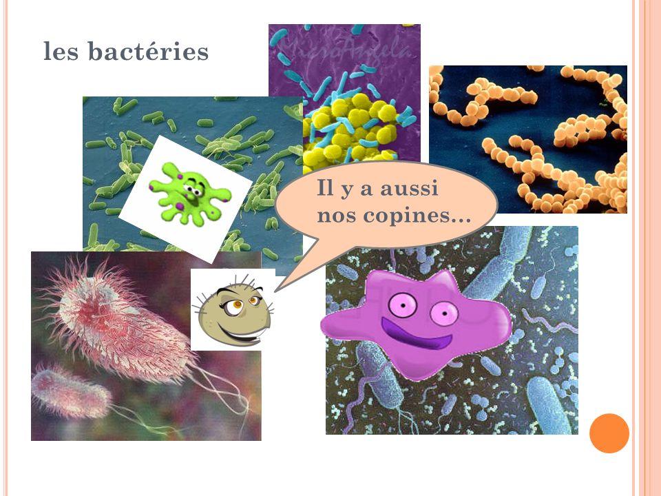 Les bactéries il y a aussi nos copines…