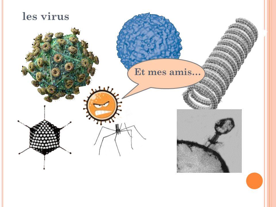 les virus Et mes amis…