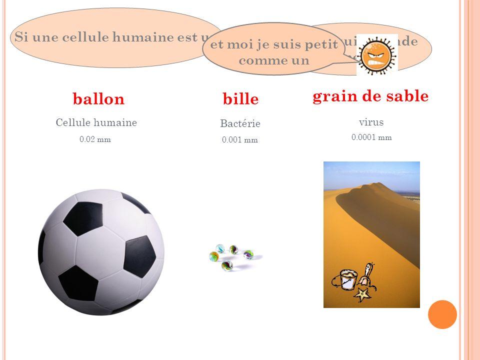 ballon Si une cellule humaine est un Cellule humaine 0.02 mm alors je suis grande comme une bille Bactérie 0.001 mm et moi je suis petit comme un grai