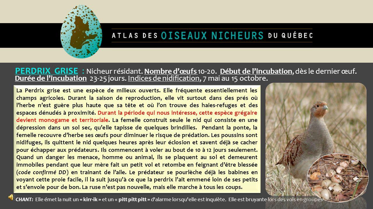 PERDRIX GRISE : Nicheur résidant. Nombre dœufs 10-20. Début de lincubation, dès le dernier œuf. Durée de lincubation 23-25 jours. Indices de nidificat