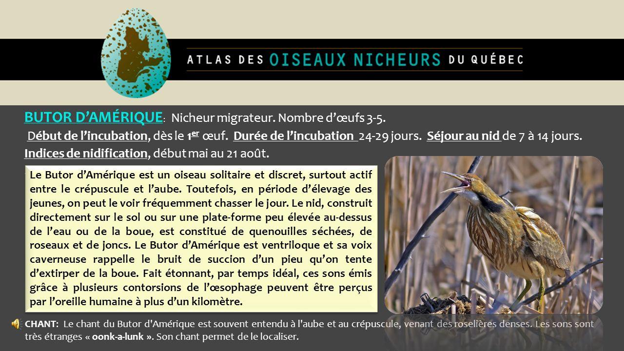 BUTOR DAMÉRIQUE : Nicheur migrateur. Nombre dœufs 3-5. Début de lincubation, dès le 1 er œuf. Durée de lincubation 24-29 jours. Séjour au nid de 7 à 1